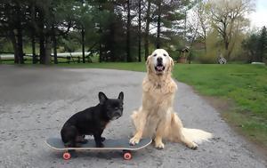 Οι δημοφιλέστερες ράτσες σκύλων και η φετινή έκπληξη στη λίστα