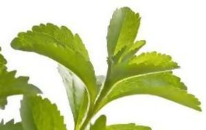 Στέβια, stevia