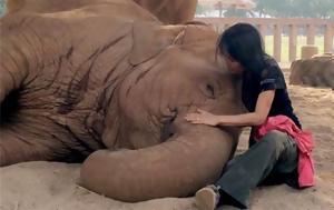 Ελέφαντας, elefantas