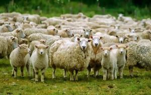 Πρόβατα, provata