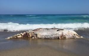 Dead, Ierapetra Crete +vid