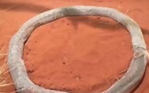 Απίστευτο Πύθωνας, [photo], apistefto pythonas, [photo]
