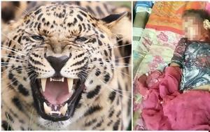 Προσοχή, Λεοπάρδαλη, 12χρονη, prosochi, leopardali, 12chroni