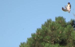 Σκίουρος, skiouros