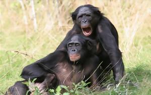 Οι πίθηκοι γίνονται πιο επιλεκτικοί όσο μεγαλώνουν