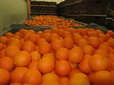 Ξεκίνησε, Orange, Λακωνίας,xekinise, Orange, lakonias
