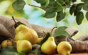 Να γιατί πρέπει να τρως ένα αχλάδι πριν πιεις αλκοόλ