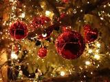 Δέντρο, Αγάπης, Προσφοράς, Φάληρο,dentro, agapis, prosforas, faliro