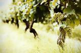 Η γεωγραφία της παραγωγής του ελληνικού οίνου,
