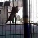 Φρικτό, – Λιοντάρι,frikto, – liontari
