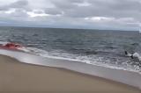 H τρομαχτική στιγμή όπου φώκια ξεφεύγει από τα δόντια λευκού καρχαρία στα ρηχά ακτής (εικόνες – video),