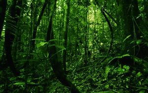 National Geographic, Εκπλήξεις, Βραζιλίας, National Geographic, ekplixeis, vrazilias