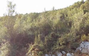 Προσφορές, Κυνηγετικού Συλλόγου Αλμυρού, prosfores, kynigetikou syllogou almyrou