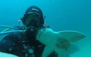 Καρχαρίας, karcharias