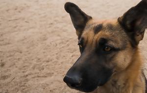 Σάλος, A Dogs Purpose, salos, A Dogs Purpose