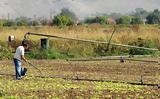 Οι νέες ασφαλιστικές εισφορές για αγρότες: Τι θα πληρώσουν φέτος,