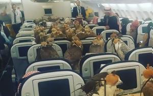 80 γεράκια ταξιδεύουν...με αεροπλάνο. H φωτογραφία έγινε viral αλλά κάποιοι δεν παραξενεύτηκαν και τόσο (;)