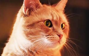Από αδέσποτος γάτος – κινηματογραφικός αστέρας