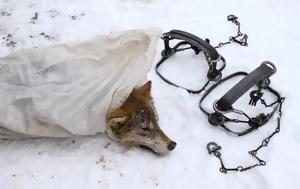 Κυνήγι, Τσερνόμπιλ, kynigi, tsernobil
