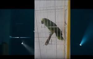 Παπαγάλος, Rihanna - ΒΙΝΤΕΟ, papagalos, Rihanna - vinteo