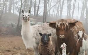 Οι πιο badass φωτογραφίες με ζώα που κυκλοφορούν στο διαδίκτυο