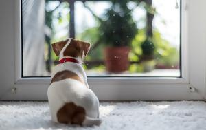 Μ' αυτά τα tips ο σκύλος σου δεν θα βαριέται μόνος στο σπίτι
