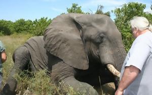 Oι ελέφαντες έχουν μάτια… γαρίδες