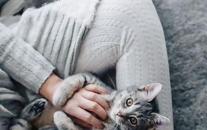 Αν αγαπάς τις γάτες,  τότε αυτή η έρευνα θα σε κάνει να χαμογελάσεις