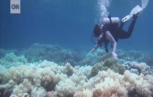Σβήνει, Μεγάλος Κοραλλιογενής Ύφαλος, svinei, megalos koralliogenis yfalos