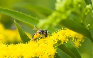 Οι αλλεργίες από μέλισσες και σφήκες