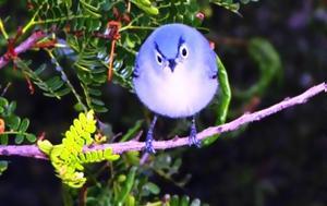Γνωρίστε, Angry Bird, gnoriste, Angry Bird