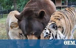 Unusual, Animals 'd, -exist