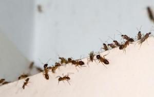 Έτσι θα κρατήσετε τα μυρμήγκια μακριά από το σπίτι σας
