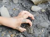 Απολιθώματα 24,apolithomata 24