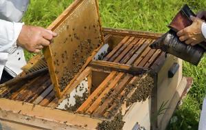 Κεφαλονιά, Αιτήσεις, Μελισσοκομίας, kefalonia, aitiseis, melissokomias