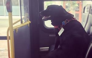 Απίστευτο, Σκύλος, apistefto, skylos