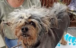 Είναι αυτά τα πιο άσχημα σκυλιά στον κόσμο;