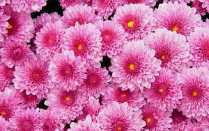 Ο μήνας που γεννηθήκατε δείχνει ποιο λουλούδι είστε
