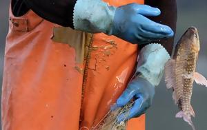 Το 10% των αλιευμάτων πετιούνται στη θάλασσα κάθε χρόνο