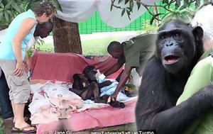 Χιμπατζής, chibatzis