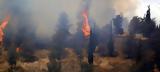 Ολονύχτια, Χανιά -Κάηκαν 2 300,olonychtia, chania -kaikan 2 300