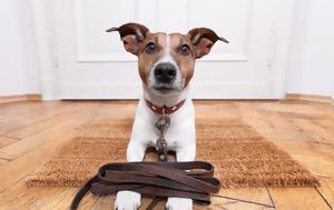 Τα σκυλιά προσφέρουν κάτι περισσότερο από συντροφικότητα