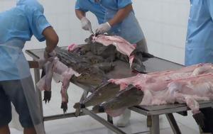 Έτσι φτιάχνονται οι επώνυμες τσάντες και οι γκουρμέ λιχουδιές: Μια ανείπωτη σφαγή…
