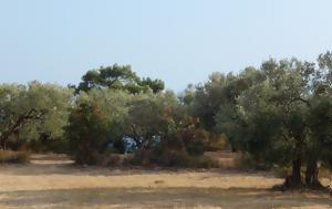 Δακοπαγίδες, Μάκρης-Αλεξανδρούπολης, dakopagides, makris-alexandroupolis