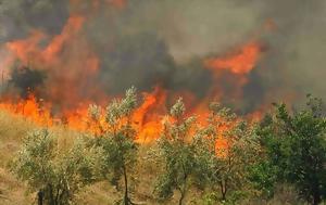 Πυρκαγιές, Ζάκυνθο, Ηλεία, pyrkagies, zakyntho, ileia