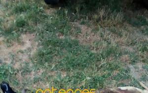 Αρκούδα, Κερασώνα Άργους Ορεστικού, arkouda, kerasona argous orestikou
