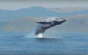 Απίστευτο, Φάλαινα, apistefto, falaina