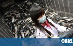 Fukushima Officials, Humans