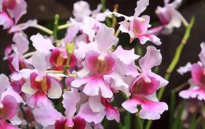 Εθνικό Κήπο Ορχιδέων 200 VIP, ethniko kipo orchideon 200 VIP