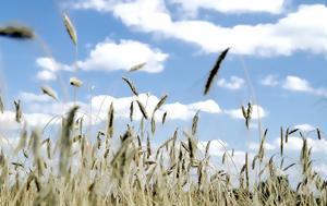 Νέοι Αγρότες, neoi agrotes